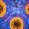 Cellular Life